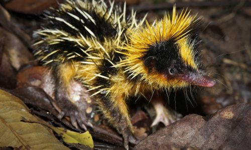13 cute, crazy and downright weird animals you've probably never heard of