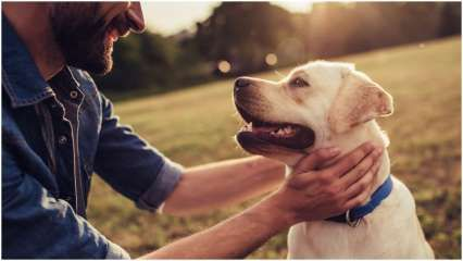 Pets played life-saving role during COVID-19 pandemic: Study
