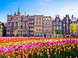 Blooming awesome: Amsterdam's sensational tulip show