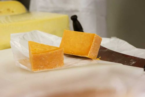 NZ Champions of Cheese Awards trophy winners announced