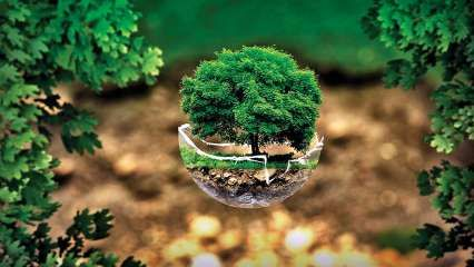 World Environment Day 2020: WhatsApp, Facebook msg, SMS, quotes to inspire you to save the environment