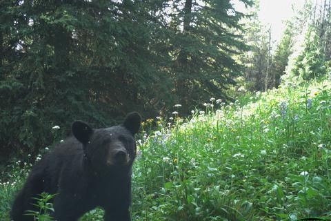 Five conservation experts weigh in on the future for wildlife post-COVID-19