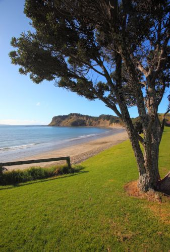 3 beautiful walks north of Auckland to explore this weekend
