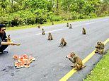 Indian politician shows monkeys 'obeying' social distancing
