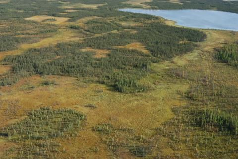Saving the peatlands: Water loss in northern peatlands can accelerate global warming, scientists say