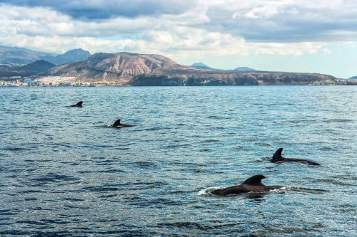 Tenerife: The conservation of cetaceans makes it Europe's first UNESCO Whale Heritage Site