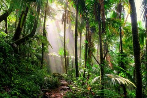 Tropical forests can handle rising temperatures up to a certain point, study finds