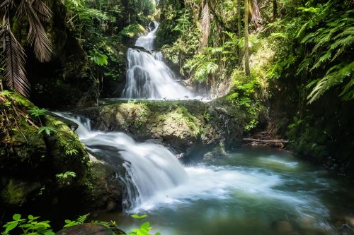 5 of Hawaii's best jungle experiences