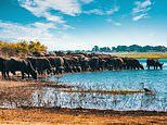 Big beasts on a budget: Here's our pick of thrilling but affordable African safaris