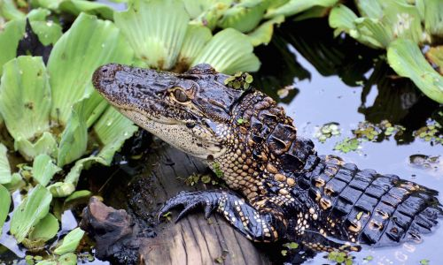 Wanderlust's ultimate guide to the wildlife of Florida