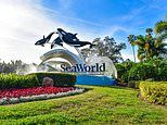 Virgin Holidays stops selling tickets to SeaWorld, Discovery Cove and Atlantis The Palm in Dubai