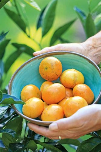 Tips for growing citrus trees in small spaces and containers