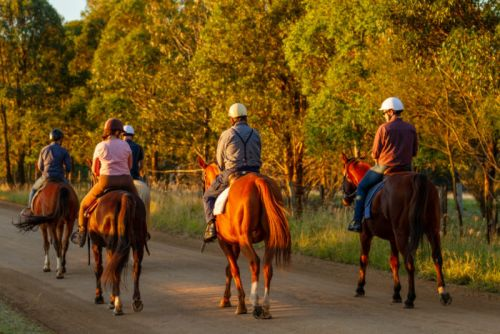 New all-inclusive wine, dine and horseback riding tours gallop into the Hunter Valley