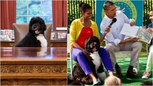 Barack and Michelle Obama say goodbye to their furry best friend Bo in emotional posts