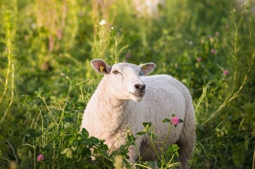 9 things to do before your livestock give birth