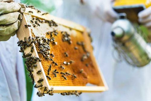 Everything you'll need to start beekeeping