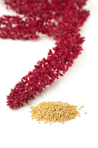 7 tips to growing gluten-free amaranth flour from seed