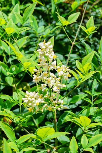 Everything to know when looking out for alligator weed on your block + how to control it