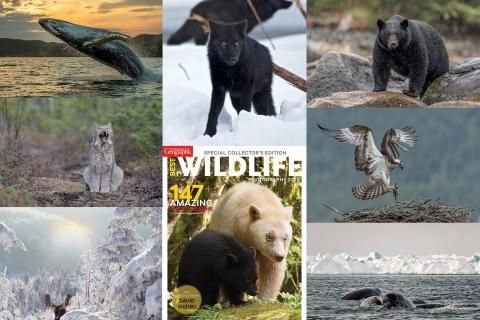 Photos: Best Wildlife Photography 2020