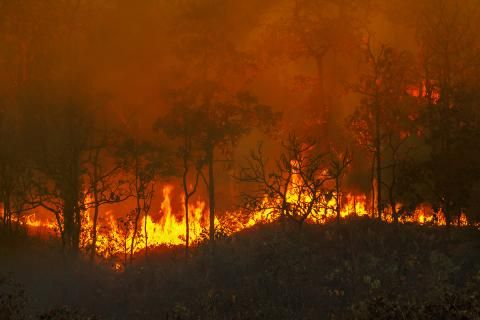 Op-ed: The Amazon fires are back - and the consequences affect us all