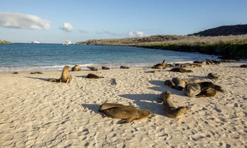 5 reasons a cruise is the best way to see the Galápagos Islands